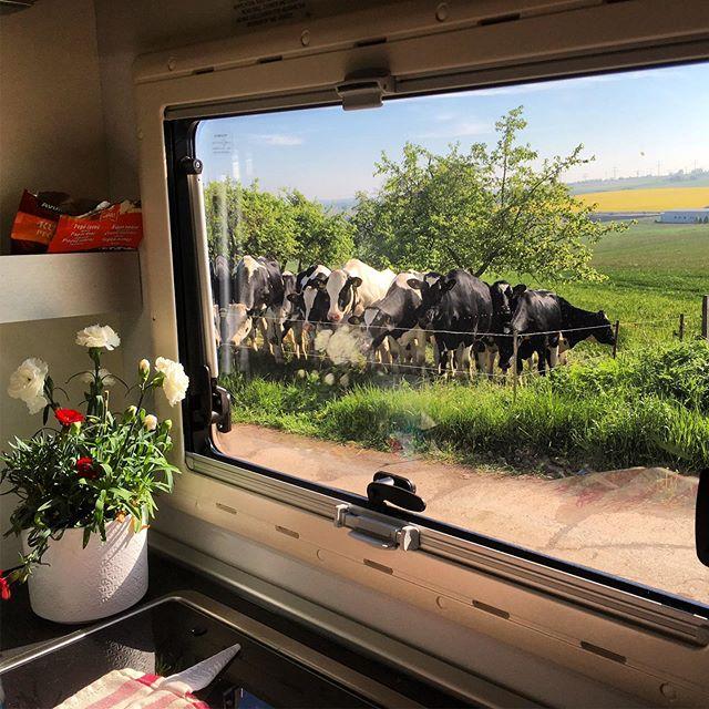 Když zaparkujete v noci, ranní pohled z okna vás může překvapit :) Krávy byly ale evidentně zvyklé, přišly se na nás podívat všechny a nechaly se pohladit. Děti měly zážitek a psi nakonec také :) . Jedna z výhod cestování karavanem je, že přespat můžete téměř kdekoliv. Když budete cestovat po Evropě, nemusíte vlastně vůbec využívat kempů - STPL pro servis najdete obvykle bez větších problémů. U nás je to bohužel jiné, ale snad se to také časem změní. . K obytným autům jsou lidé i úřady obvykle shovívaví, protože když odjedete, nezůstanou po vás žádné stopy. Maximálně po kolech :) . Proč to celé píšu - neplánujte si cestu jako s osobním autem. Nejen, že určitě pojedete o třetinu až polovinu pomaleji, řízení je přece jen náročnější (boční vítr, neustálé sledování šířky, nájezdy do křižovatek...), ale hlavně se připravíte o takovéhle zážitky :) Takže jeďte v klidu, střídejte se a užívejte si! . #psikaravan #pkadriana #pk1 #rvliving #rvlife #motorhome #rvlifewithdogs #rvlifewithkids #morning #cows #nature #field #breakfast
