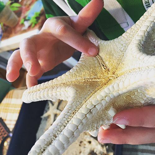 sensory-starfish.jpg