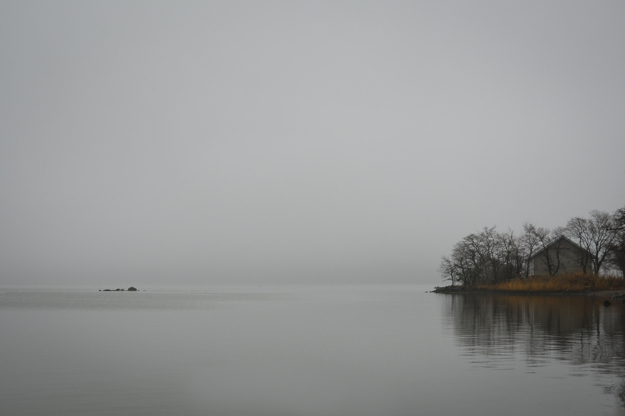 DSC_fog f.jpg