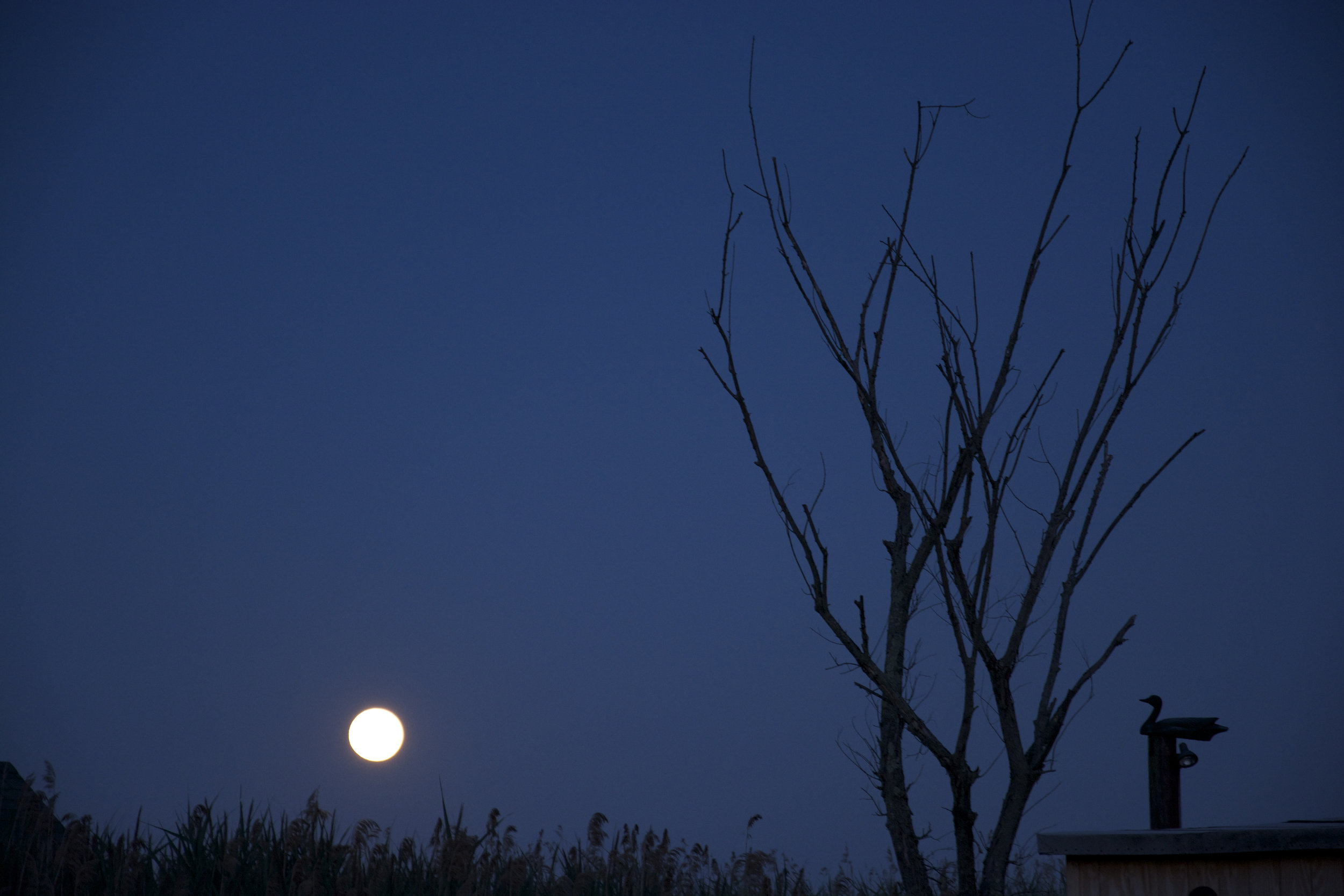 blue moon july 2015.jpg
