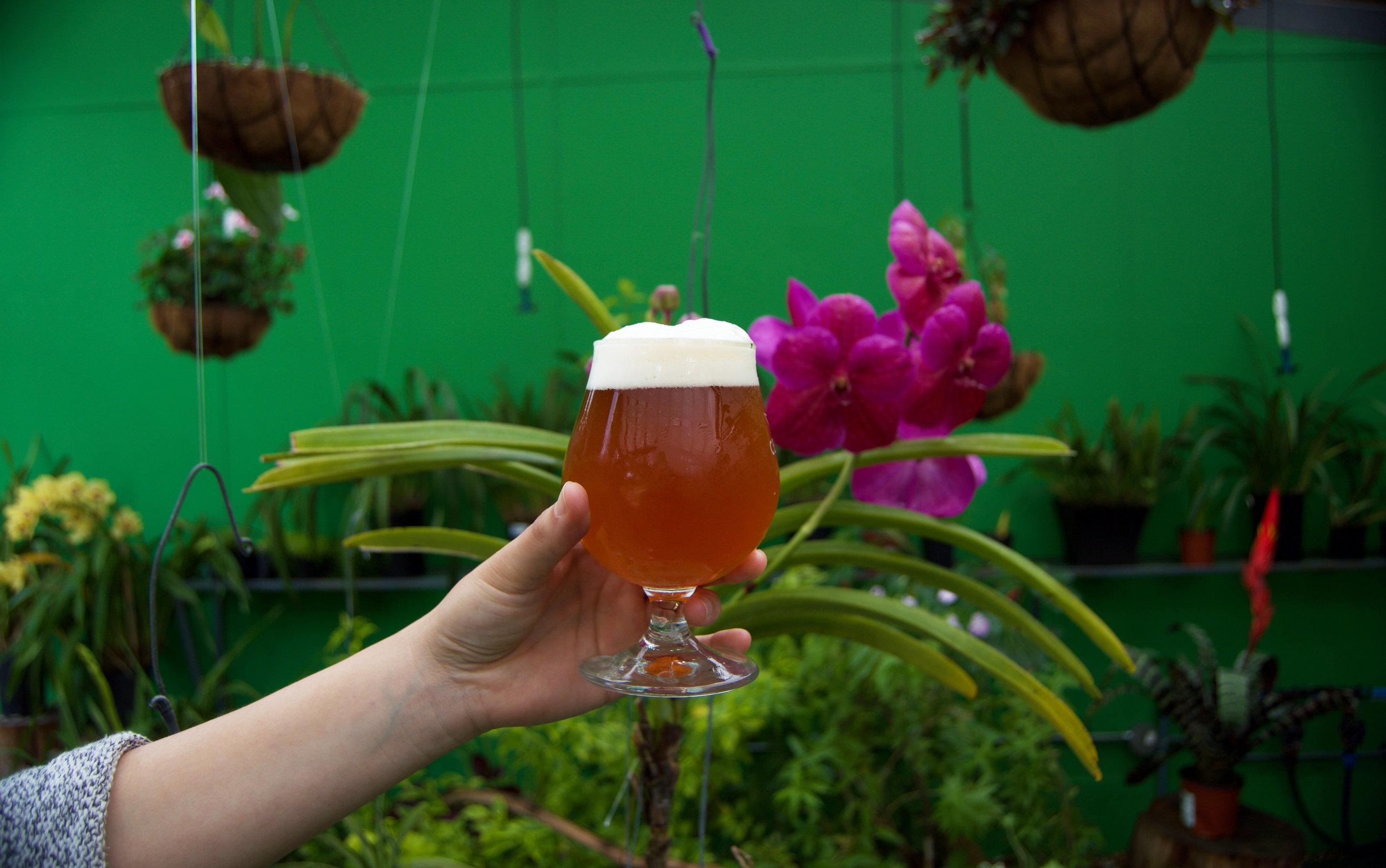 el futuro de la cerveza artesanal -