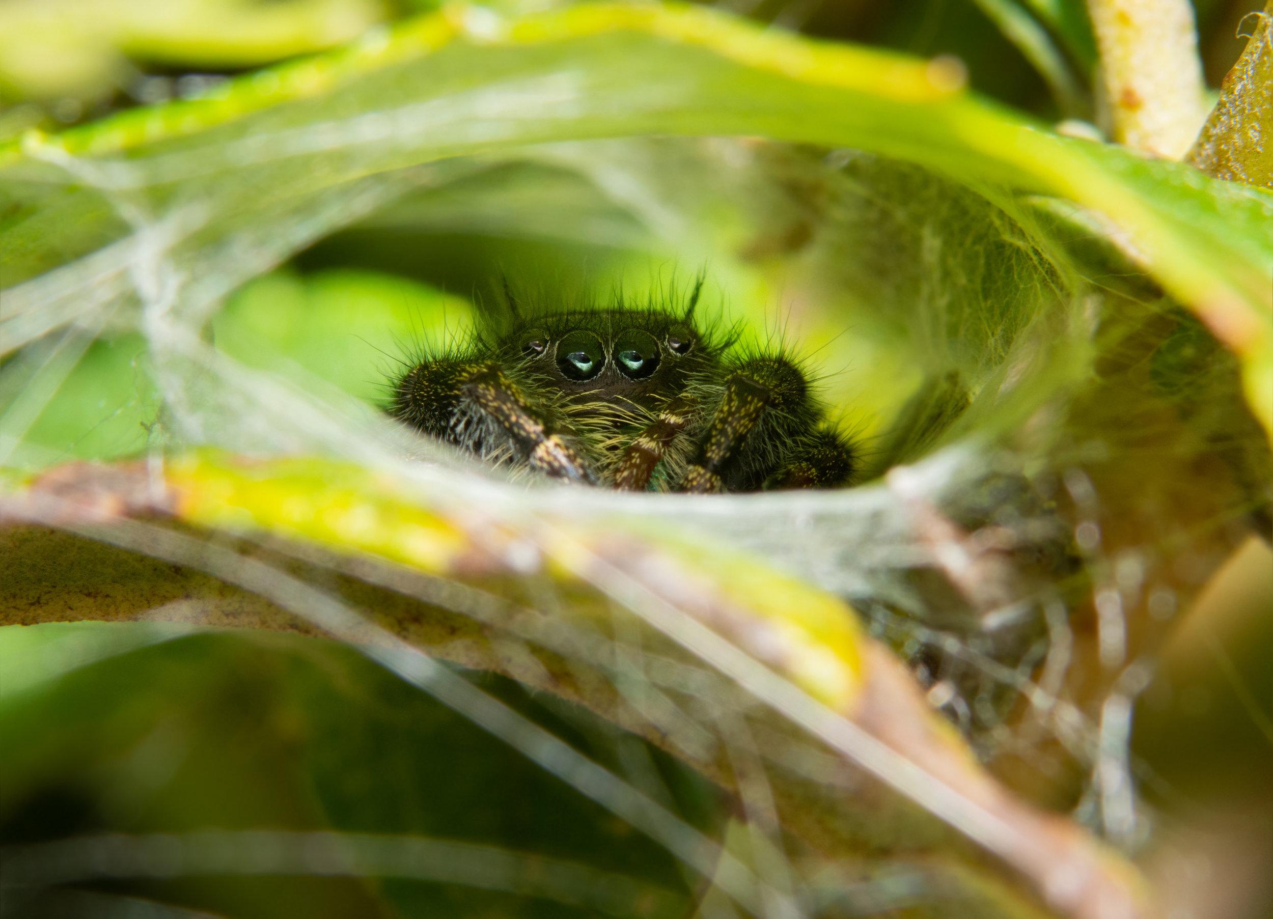 Hiding Spider.jpeg