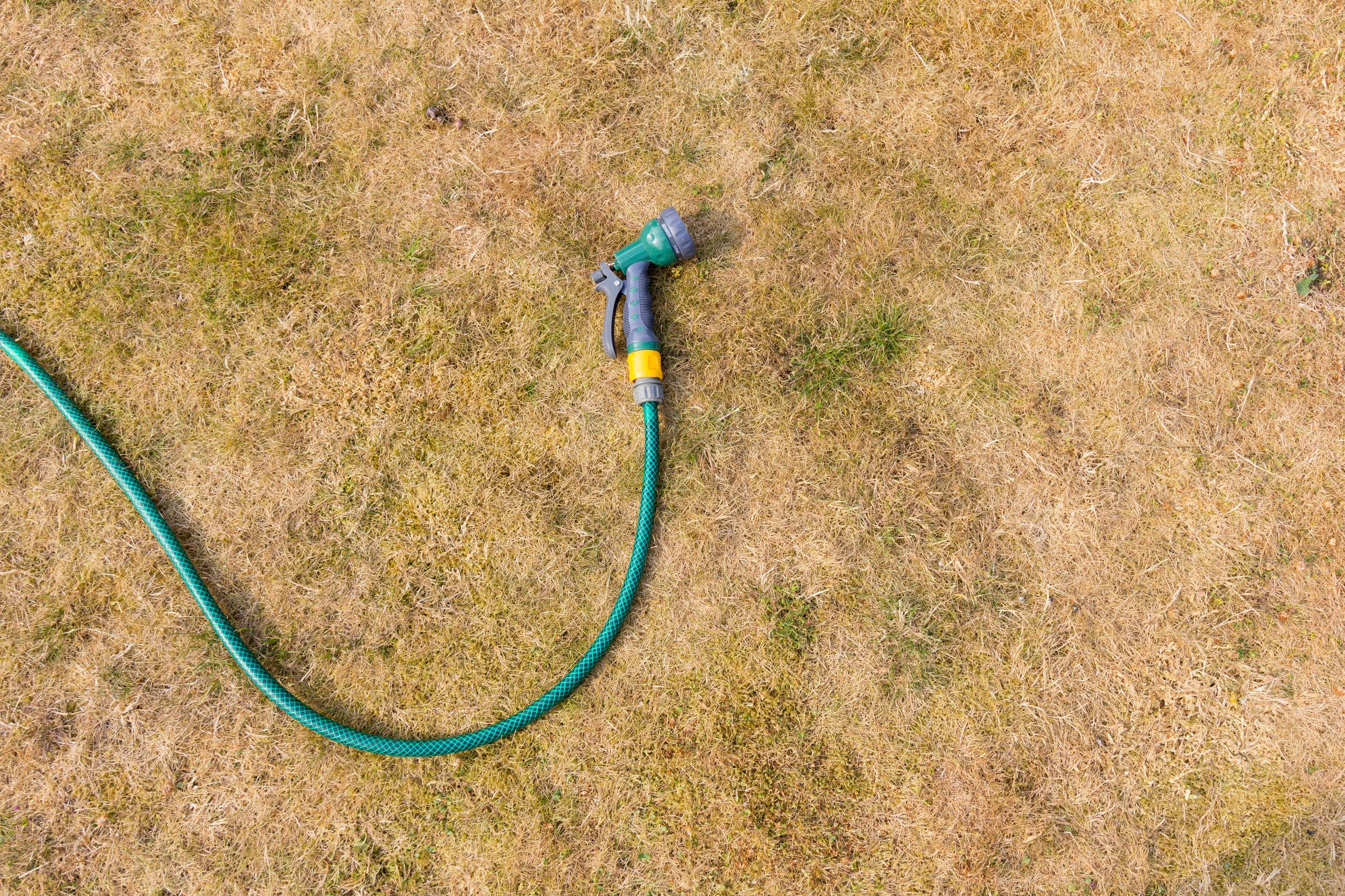 Dying Lawn needing fertilization.jpeg