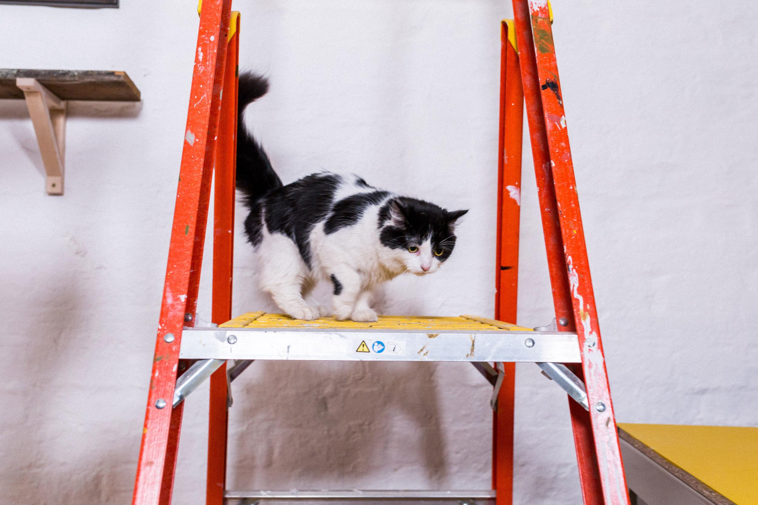 Helen the cat. Photograph:  Jessie Leung