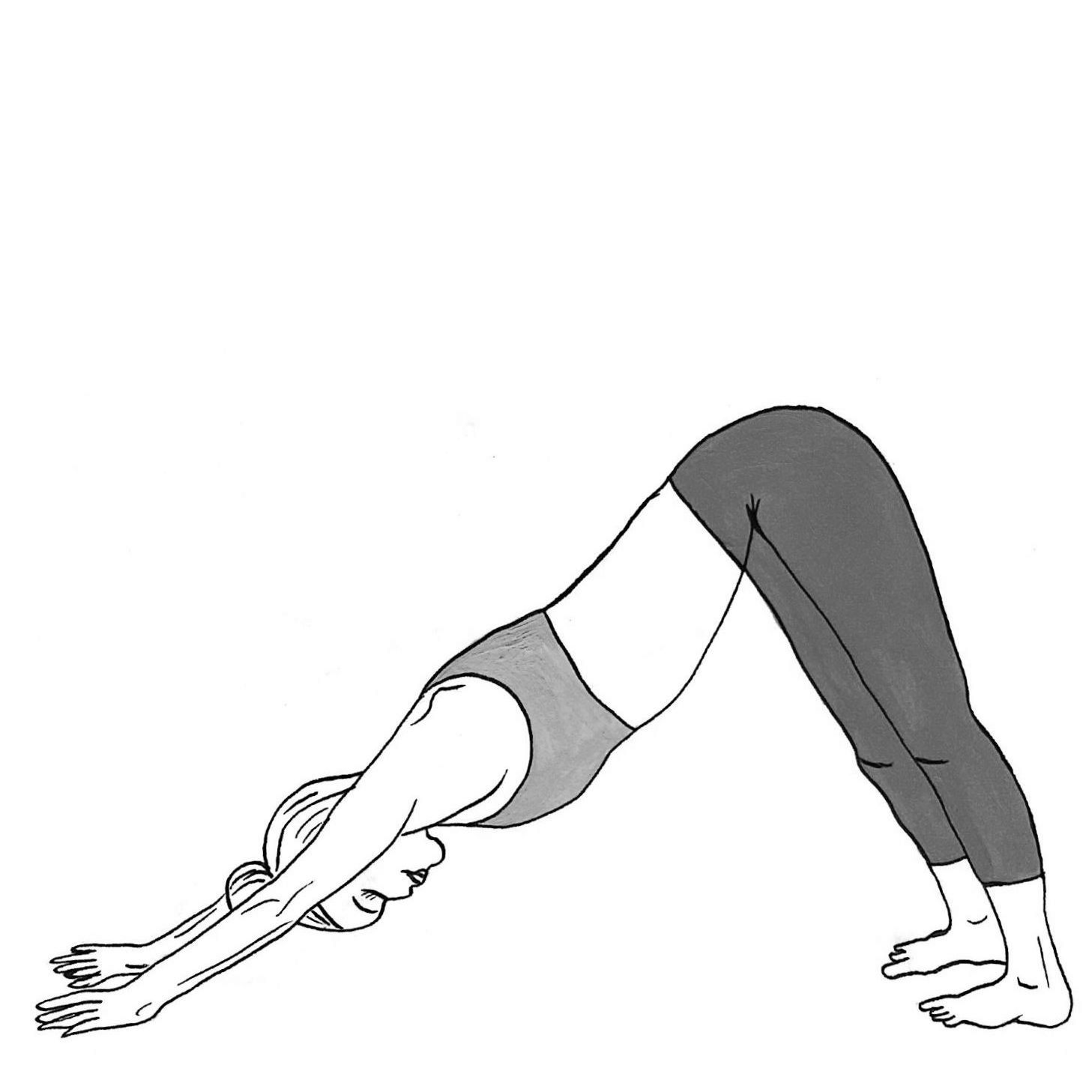 Downward Facing Dog - Adho Mukha Savanasana