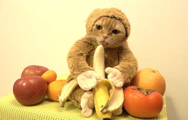 cat banana.png