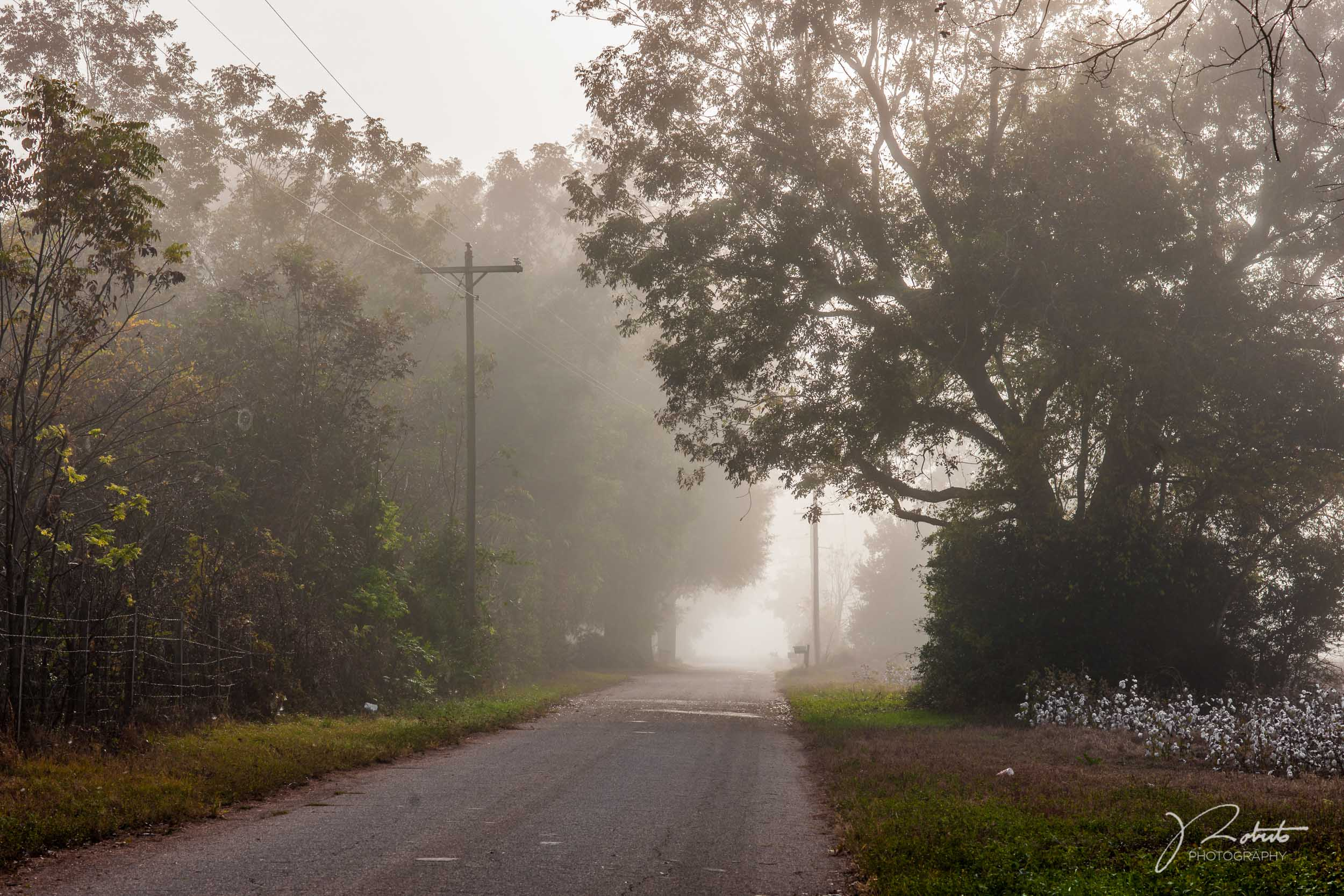 Fog_02.jpg