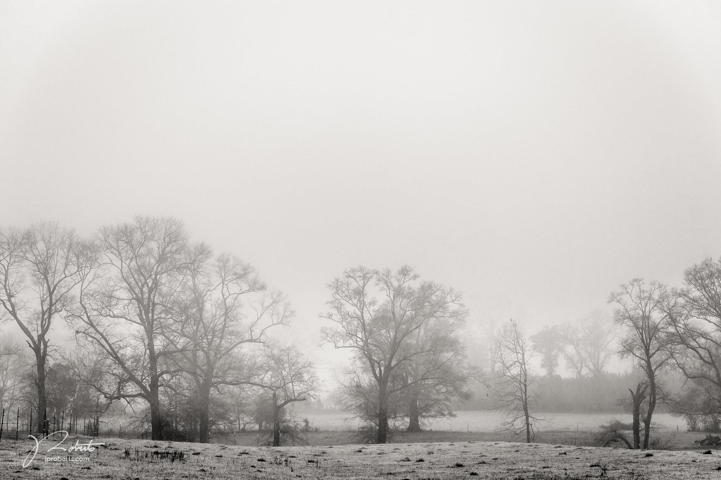 FoggyMorning_01.jpg