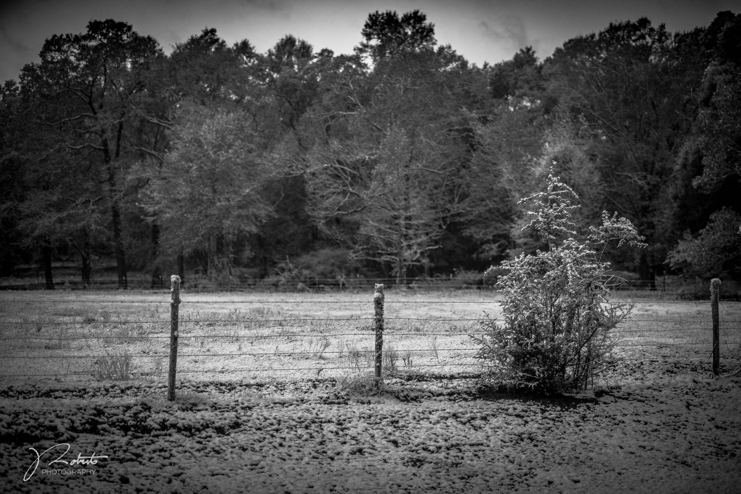 Snowfall_04.jpg