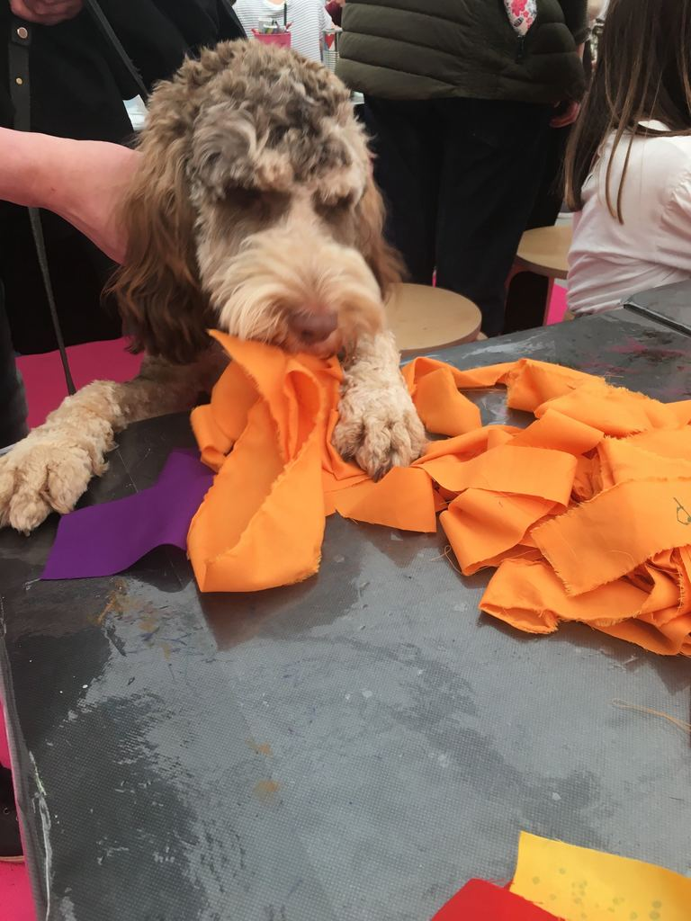 A puppy dog trying to grab a piece of orange cloth