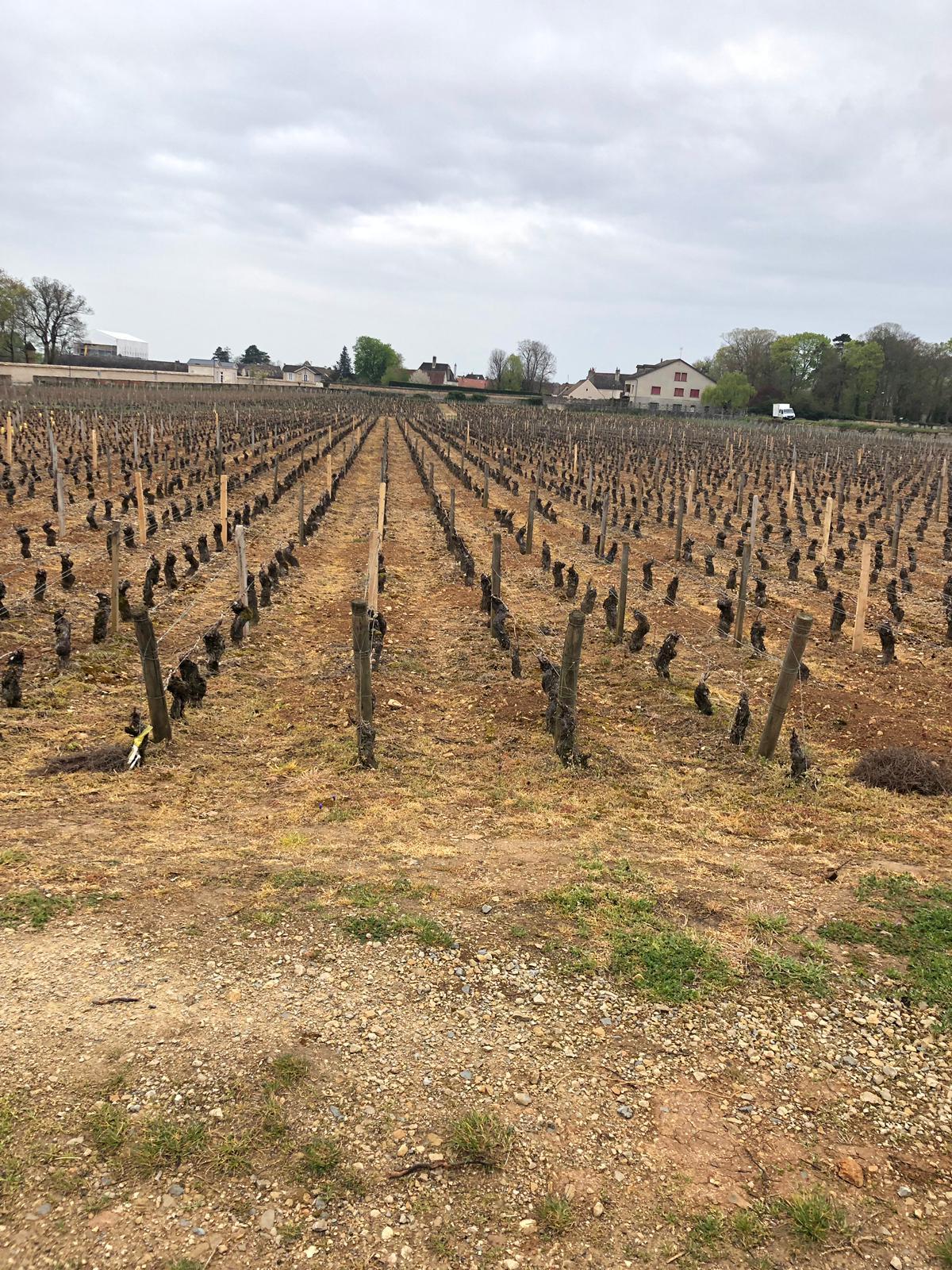 16-04-2019: A vineyard in Pommard with Glyfosate (Roundup)