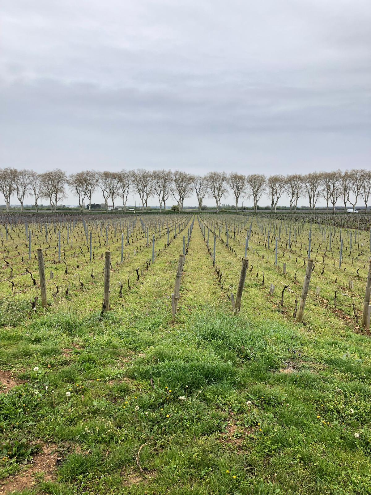 16-04-2019: The neighboring vineyard who works organic and pesticide free