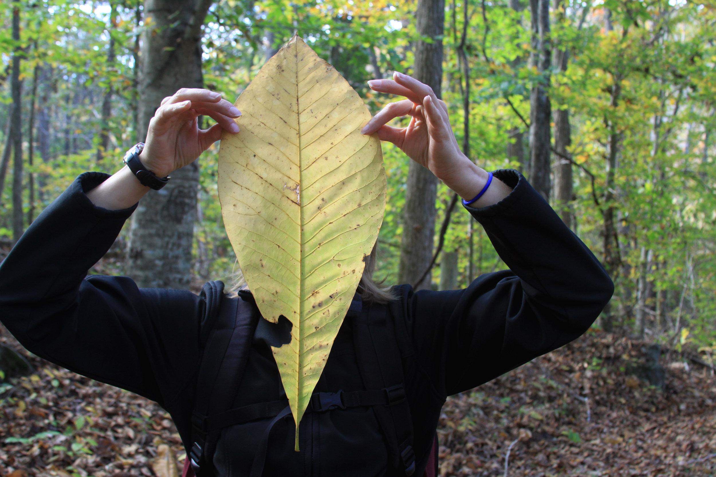 Big leaf person.jpg