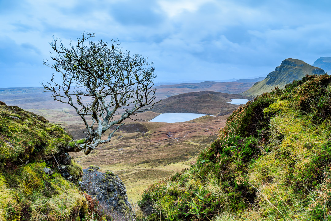 21-3285 Tree at the Quiraing