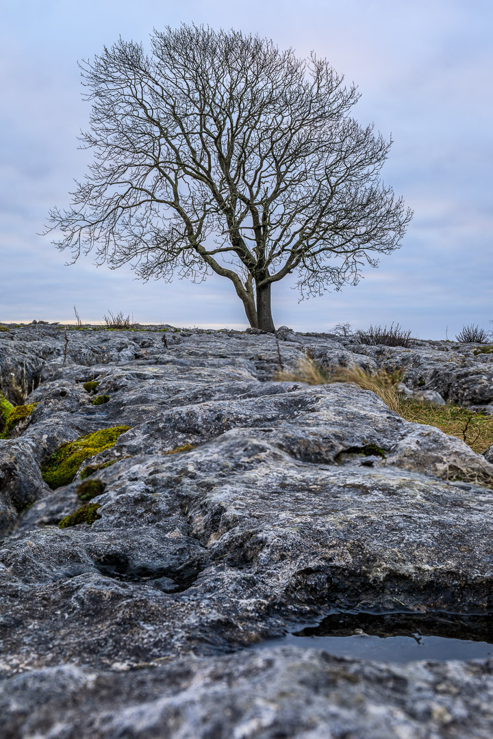 21-3751 Lone Tree at Malham