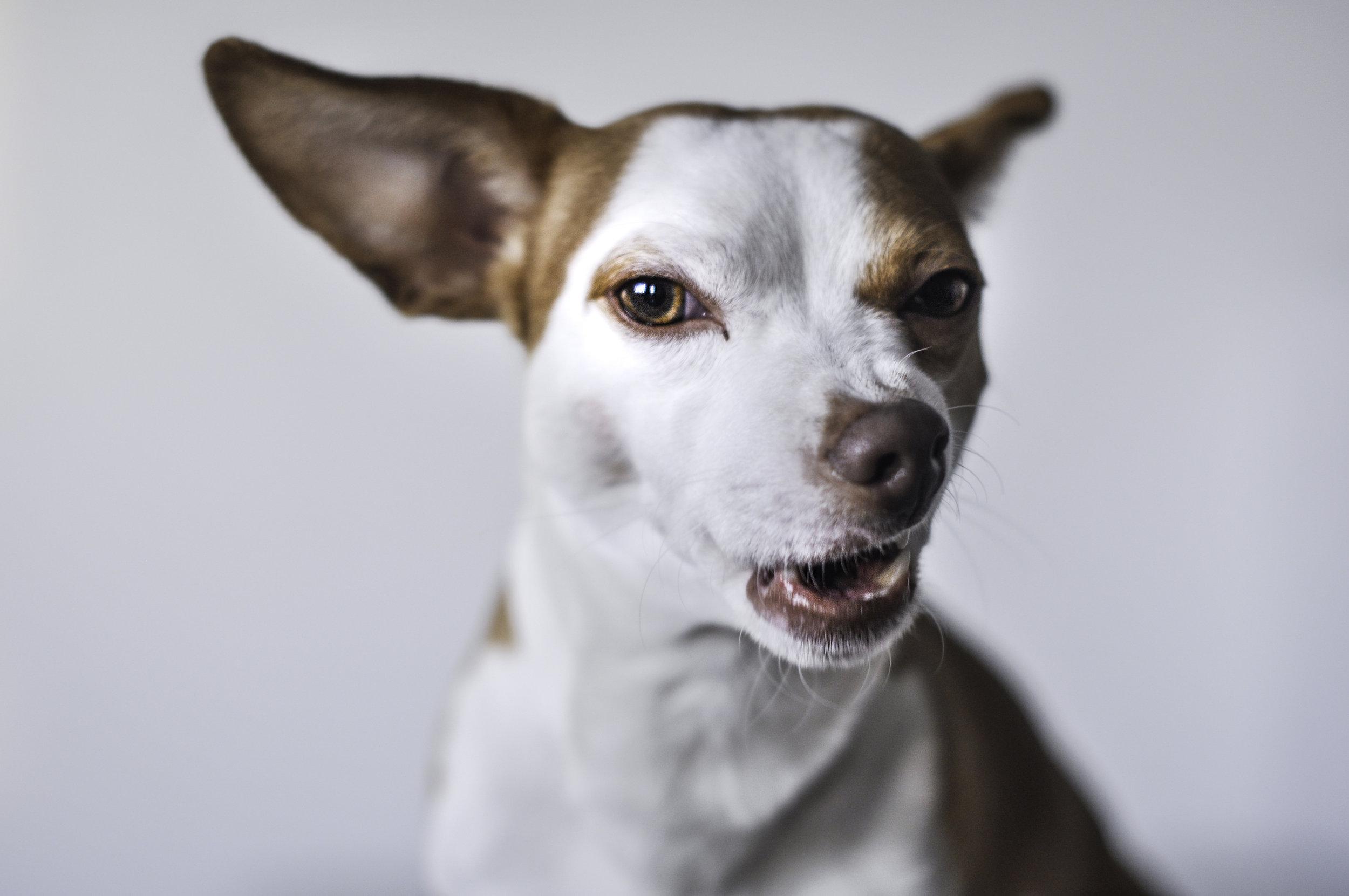 behavior - No Bad Attitudes Here. Happy Dog = Happy Life!