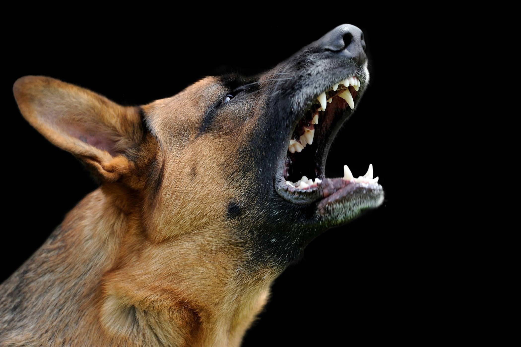 Aggression and rehabilitation - All Bark and Bite? - We can help!
