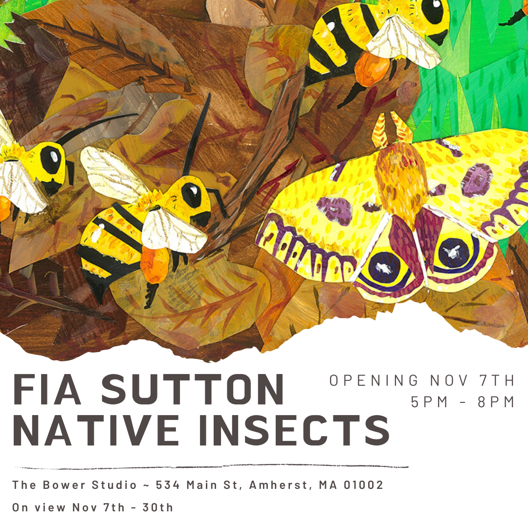 Fia sutton native insects.png