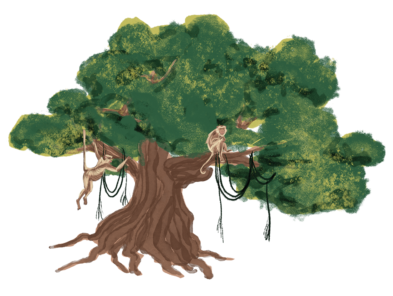 Banyan Tree.png