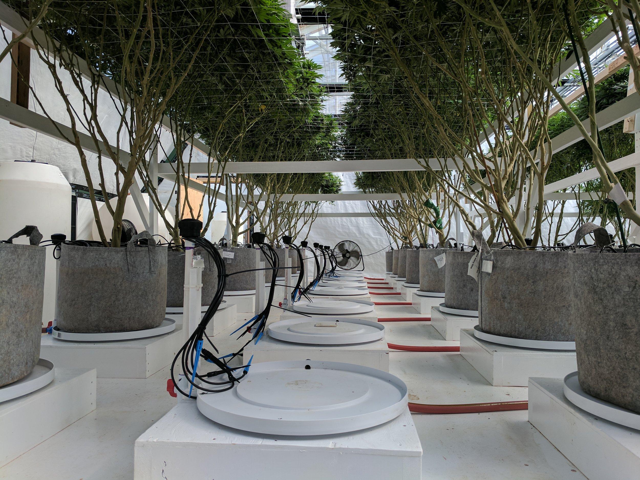 underneath plants.jpg