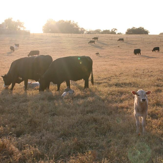 Riverbend-Ranch-Herd.jpg