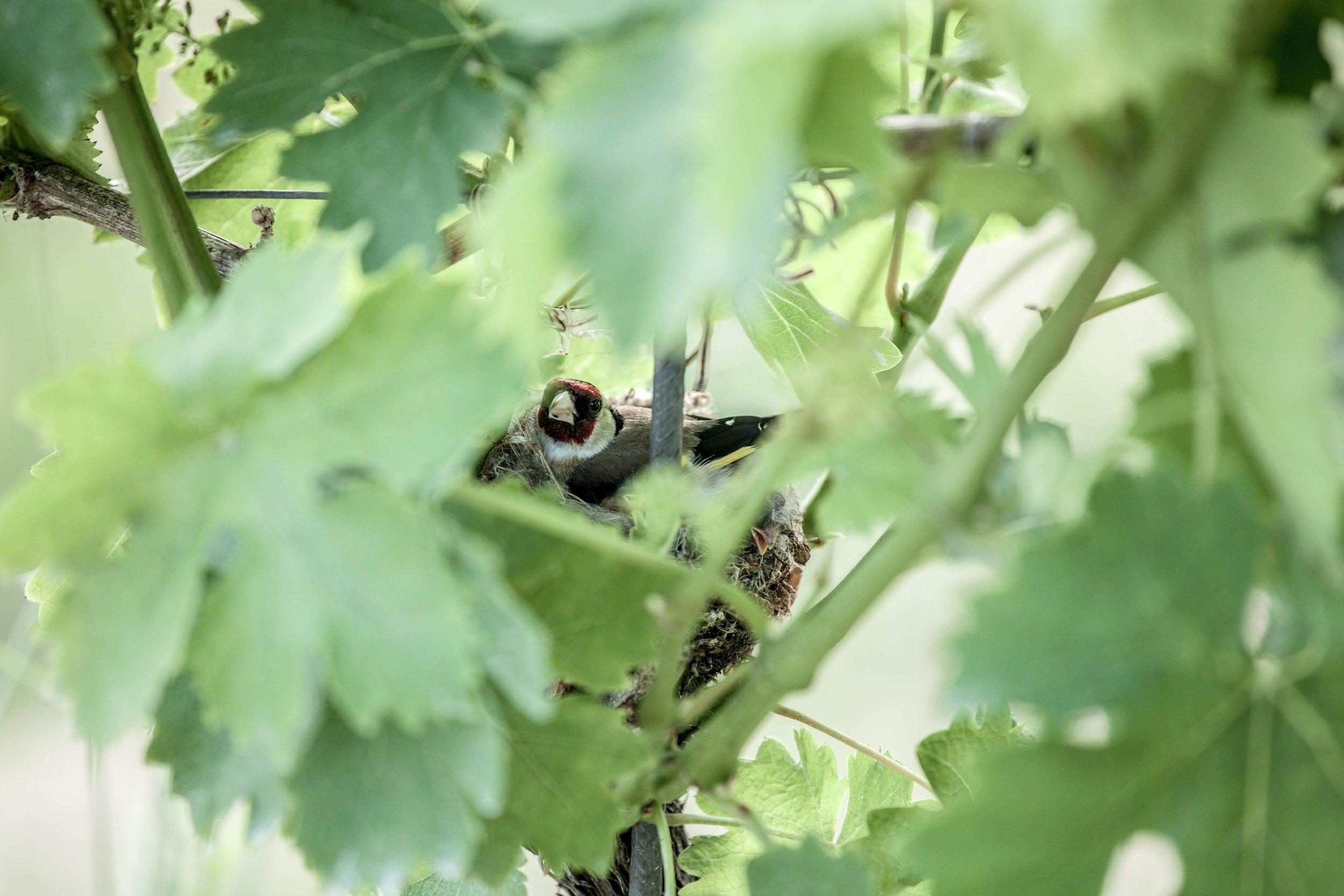 Weingarten_Naturverbundenheit_klein-0697.JPG