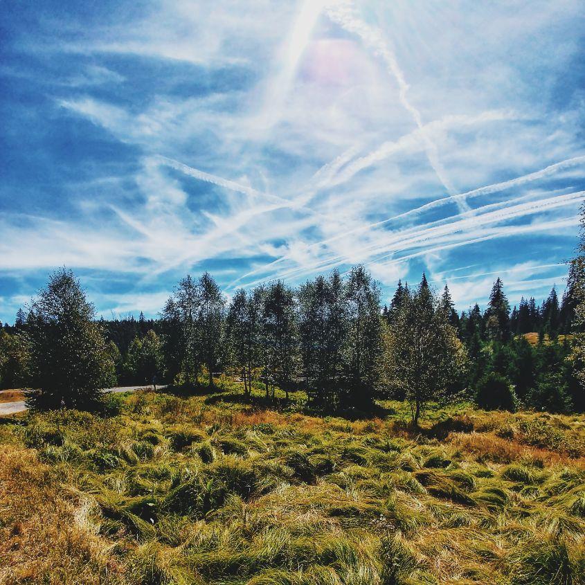 sumava-national-park (10).jpg