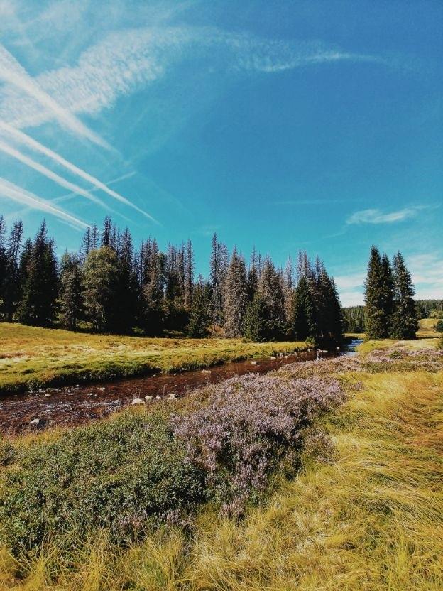 sumava-national-park (4).jpg