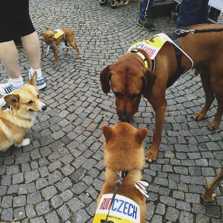 dog marathon in Prague