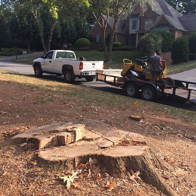 Taking out another ugly stump!