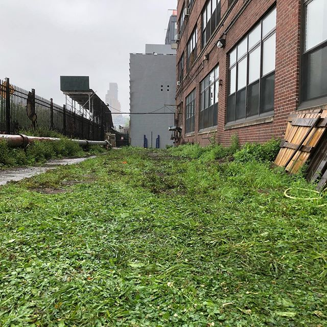 The lot that used to store our vines, Brooklyn Macy Yard.