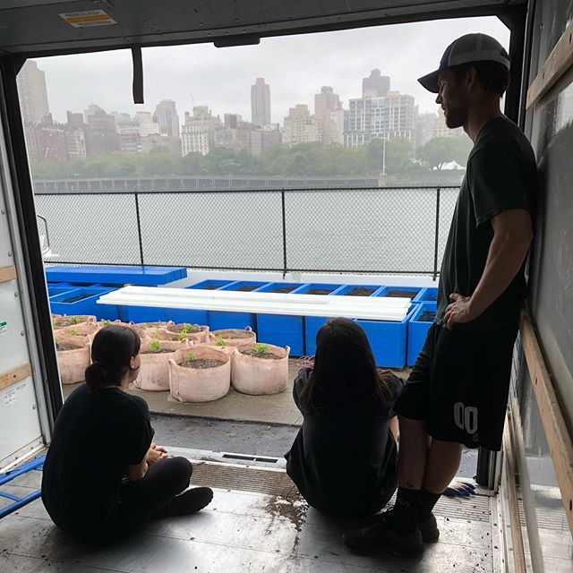 We just moved our vines to their permanent home by the waterfront in Astoria. Hiding from the rain in the U-Haul.