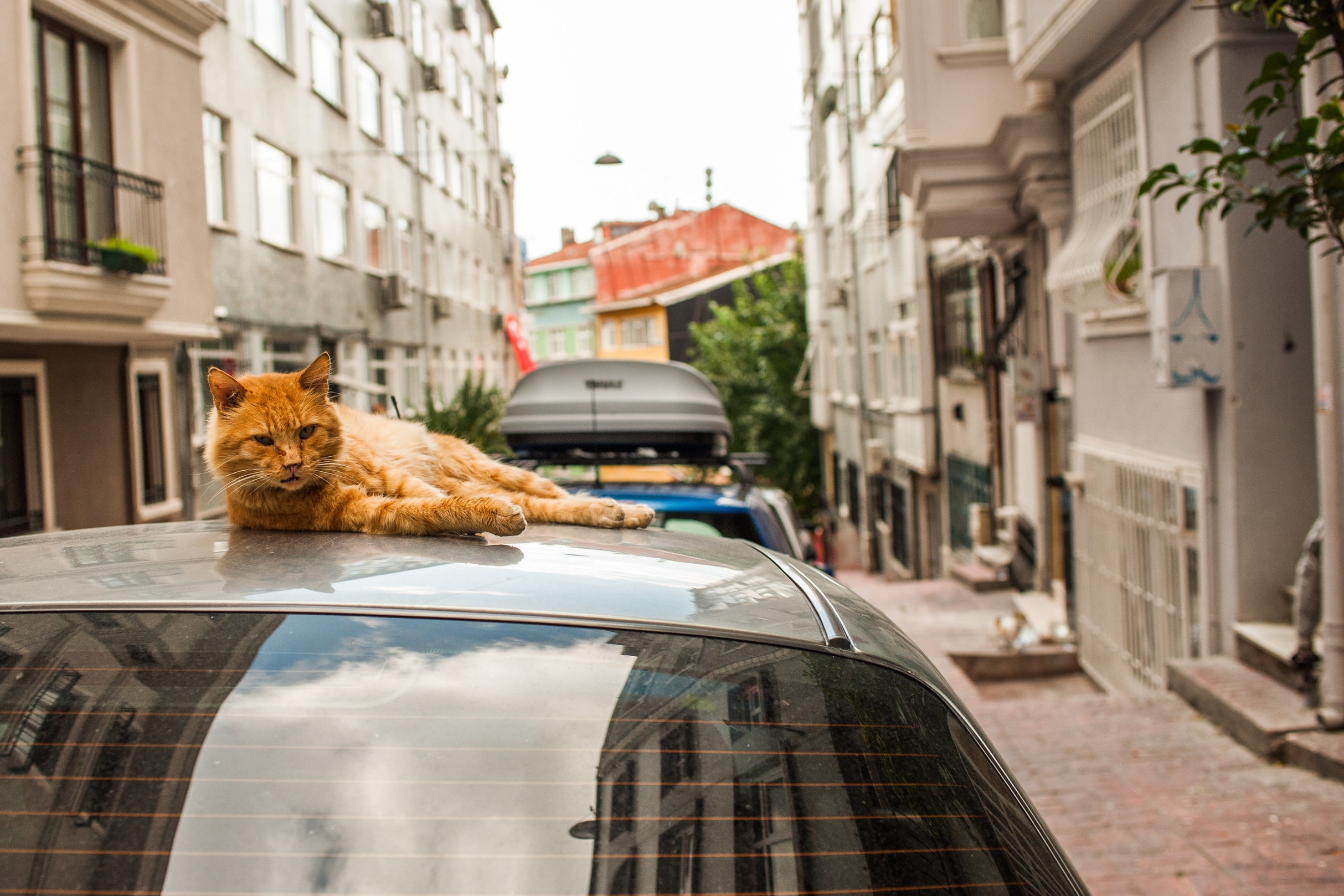 the alley cats of istanbul - They don't have owners—and that's the point.Paris Review Daily, 2017.