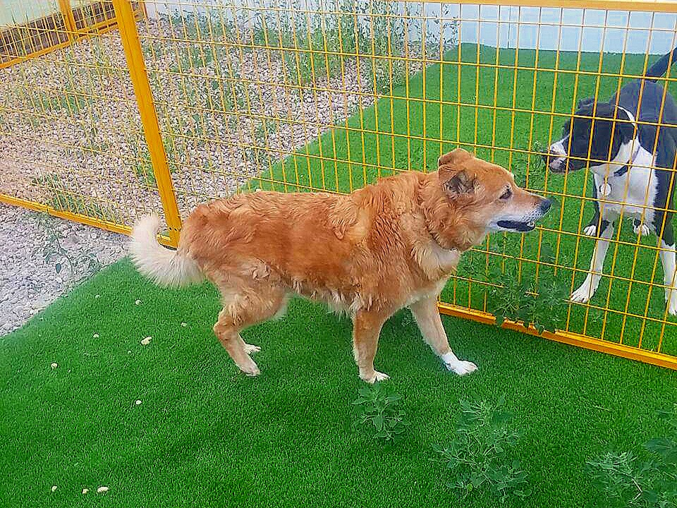 Dog Run and Day Care Dogs Paradise  Resort Pet Hotel Boarding Kennel