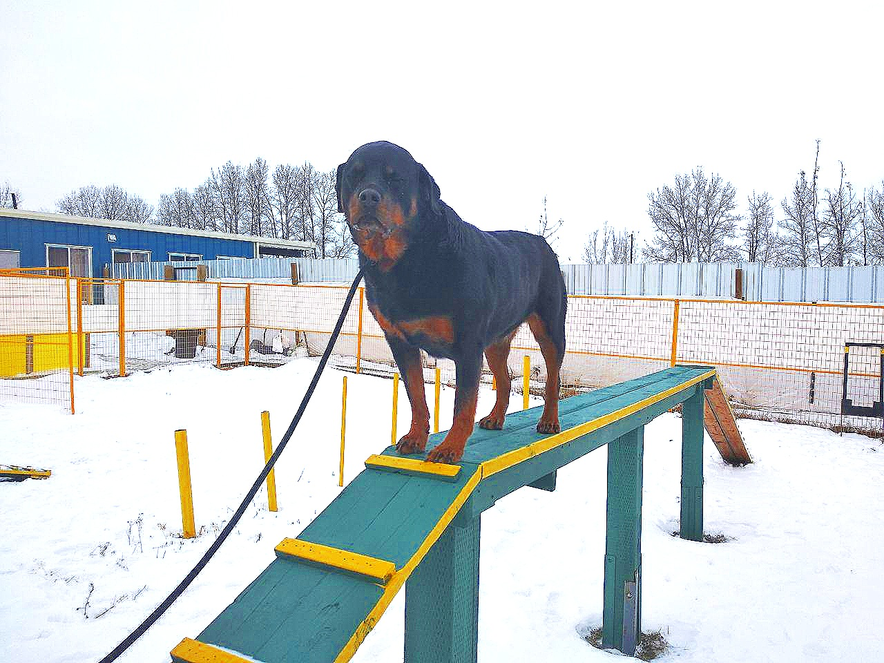 Training Facility Pet Hotel Boarding Kennel Dogs Paradise Resort
