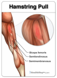 hamstring-pull-biceps-femoris-219x300.jpg