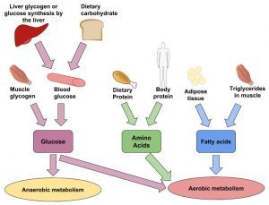 anaerobic-and-aerobic-metabolism-300x229-300x229.jpg