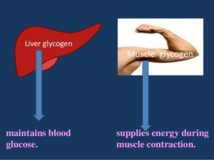 carbohydrate-metabolism-4-638-300x225.jpg