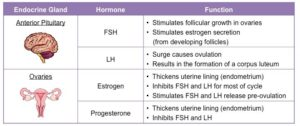The main hormones and their function in your period cycle