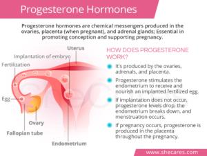 progesterone-300x227.png