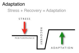 Stress__Adaptation-300x203.png
