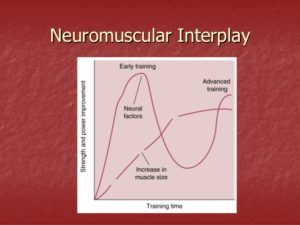 neuromuscular-adaptations-to-training-14-638-300x225.jpg