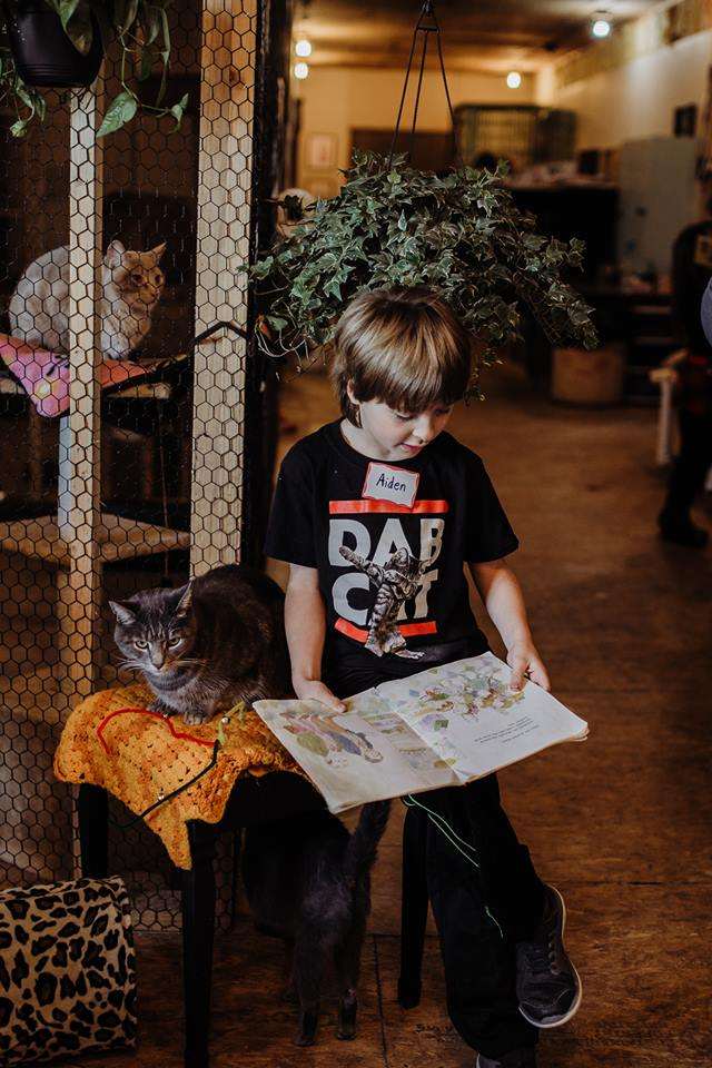 Our Mission - Spirits Place engages grassroots compassion,education and creativity to elevate animal welfare and quality of life in our community by promoting and assisting in the spaying/neutering, medical care and compassionate management of stray, abandoned, feral and community cats.Learn More