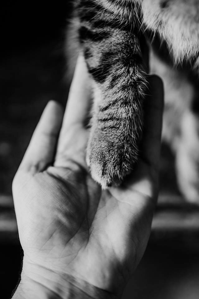 - How do we save all of the cats? We need YOUR help!! There are so many ways that you can volunteer. We are always seeking motivated, responsible, caring, community minded folks that can work well as a team. There is lots to do and plenty of categories to choose from.