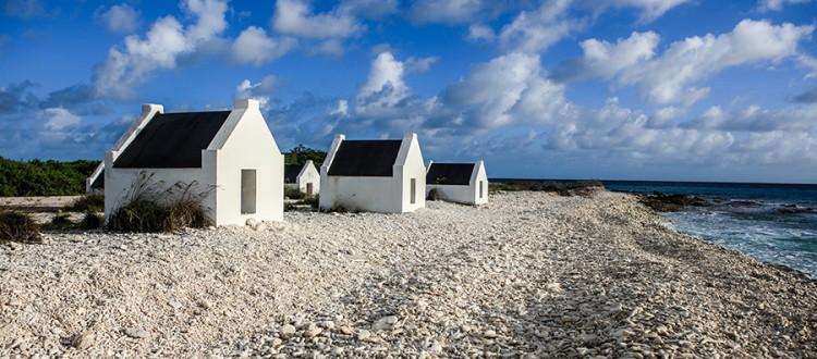 de-vallei-stichting-valley-foundation-Bonaire_Esther Wolfs.jpg