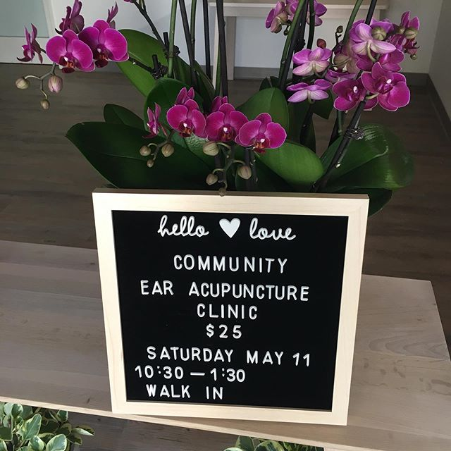 I'm excited to be offering my first ear acupuncture clinic in our new space. Did you know what we can treat the entire body from just the ear? It is especially good for pain conditions, sleep, stress and anxiety. This Saturday, May 11, 10:30-1:30. Walk-ins are welcome. Email me if you want to reserve a time. #acupuncture #ojai #communityacupuncture #earacupuncture #ojailove
