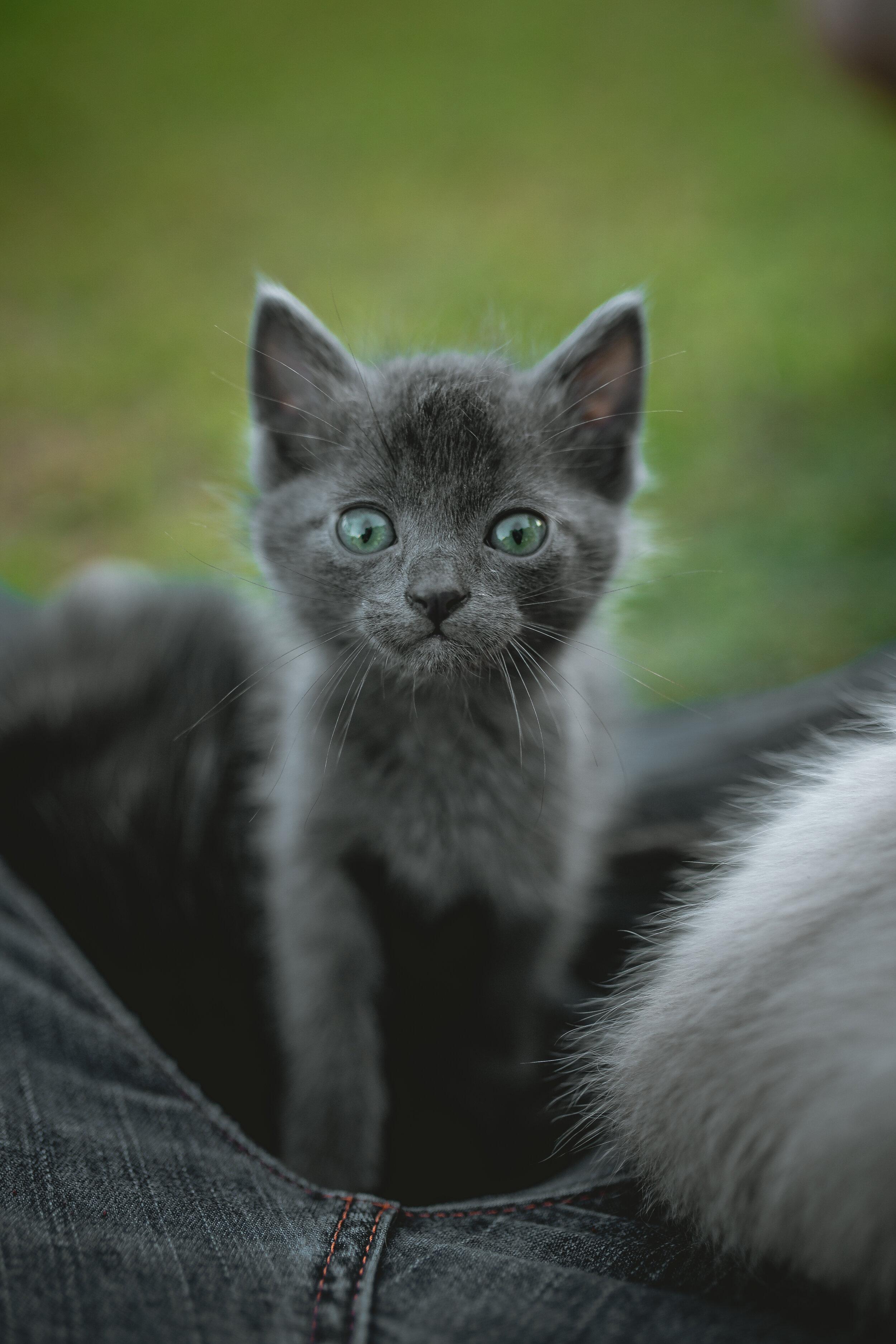- Bobby Exodus- Forever Kitty