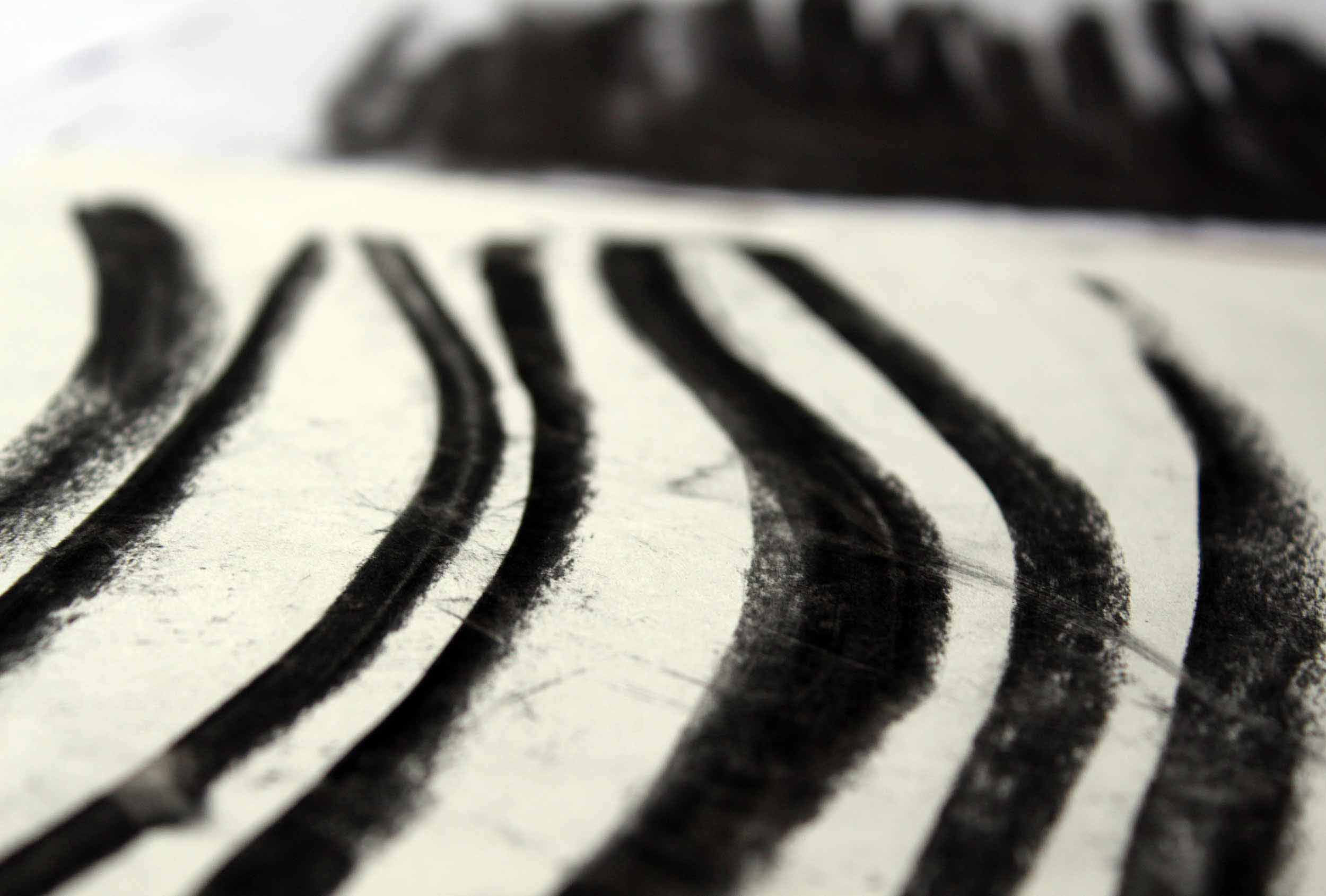 Distil-Studio_Springs-Smokery_Charcoal-Illustration-Lines.jpg