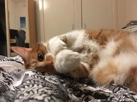 As evidenced by this demonstration of floofy belleh+ bunny paws, Romeo sure is relaxed and happy.