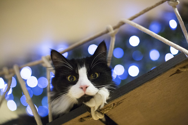 Pet Care in the UK - Complete our short survey for the chance to win a £100 John Lewis Voucher!Full terms and conditions can be found here.